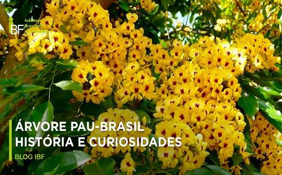 Flor Pau Brasil