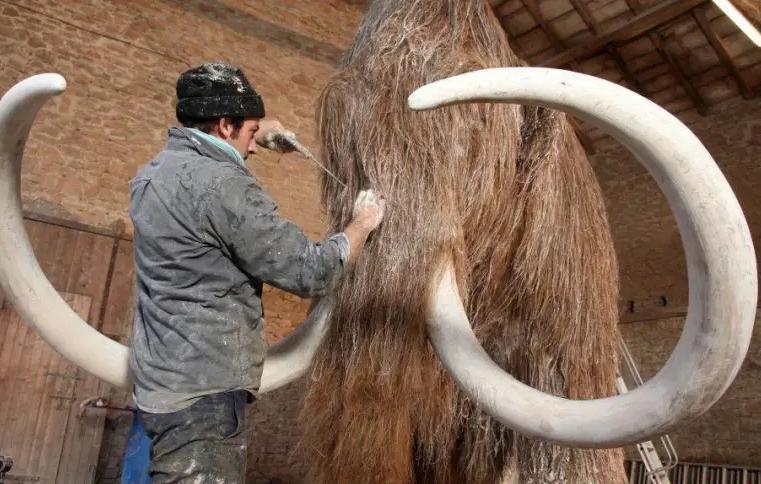 Engenharia genética, vai criar um híbrido de elefante-mamute Gamma-Rapho